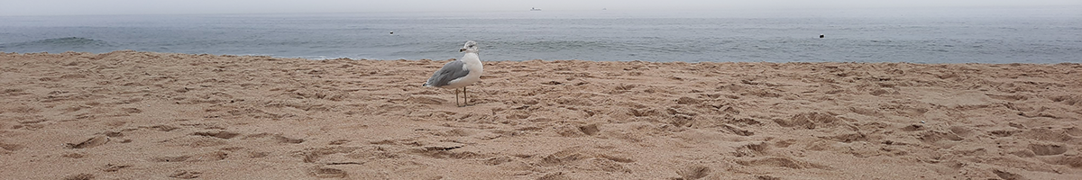 A seagull standing on the sand at Asbury Park Beach
